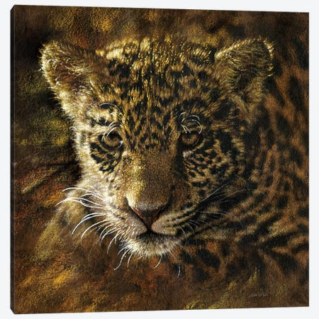 Jaguar Cub Canvas Print #CBO105} by Collin Bogle Art Print