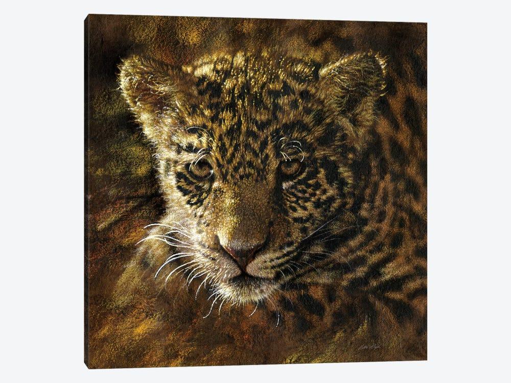 Jaguar Cub by Collin Bogle 1-piece Canvas Wall Art