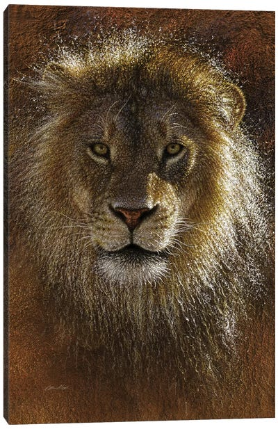Lion Face Off Canvas Art Print