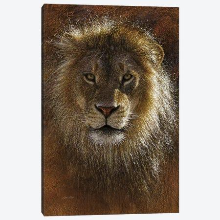 Lion Face Off Canvas Print #CBO106} by Collin Bogle Canvas Print