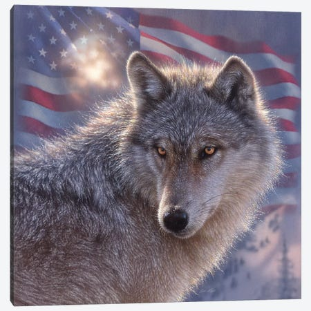 Lone Wolf - America Canvas Print #CBO108} by Collin Bogle Canvas Art