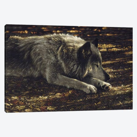 Resting Wolf Canvas Print #CBO109} by Collin Bogle Canvas Wall Art