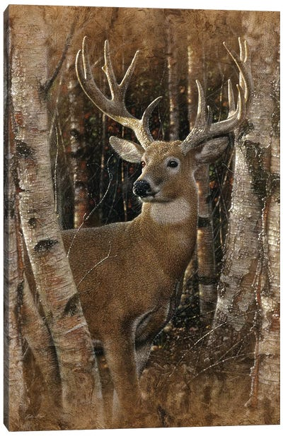 Birchwood Buck, Vertical Canvas Art Print