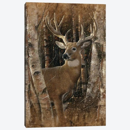 Birchwood Buck, Vertical 3-Piece Canvas #CBO10} by Collin Bogle Canvas Art