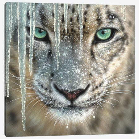 Snow Leopard - Blue Ice Canvas Print #CBO113} by Collin Bogle Canvas Print