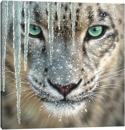 Snow Leopard - Blue Ice Canvas Art Print