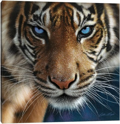 Tiger - Blue Eyes Canvas Art Print