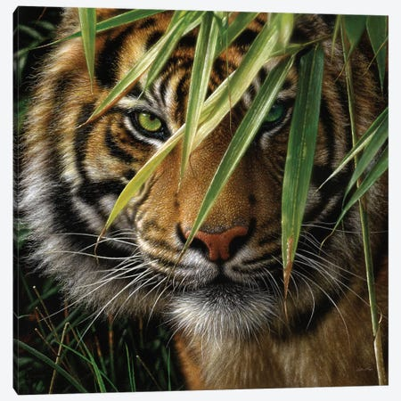 Tiger - Emerald Forest Canvas Print #CBO116} by Collin Bogle Canvas Artwork