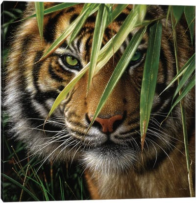 Tiger - Emerald Forest Canvas Art Print