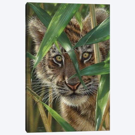 Tiger Cub Peekaboo Canvas Print #CBO117} by Collin Bogle Canvas Artwork