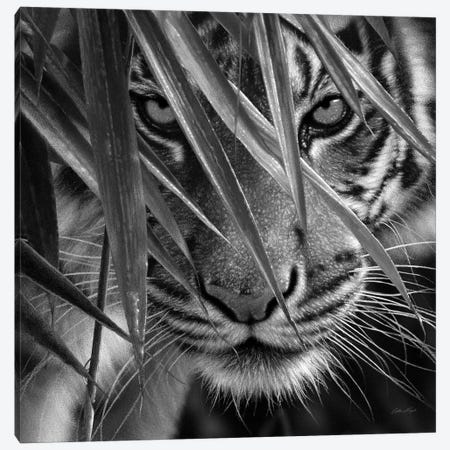 Tiger Eyes Bamboo In Black & White 3-Piece Canvas #CBO118} by Collin Bogle Art Print