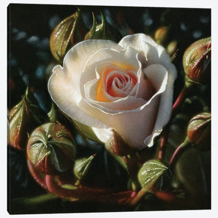 White Rose - First Born Canvas Print #CBO119} by Collin Bogle Canvas Print