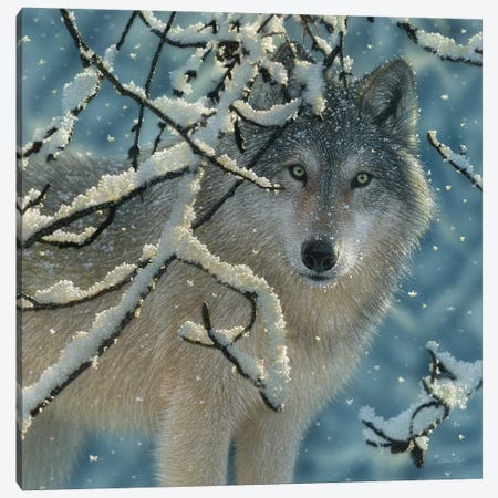 Broken Silence - Gray Wolf, Square Canvas Print #CBO11} by Collin Bogle Canvas Wall Art