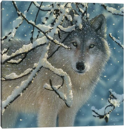 Broken Silence - Gray Wolf, Square Canvas Art Print