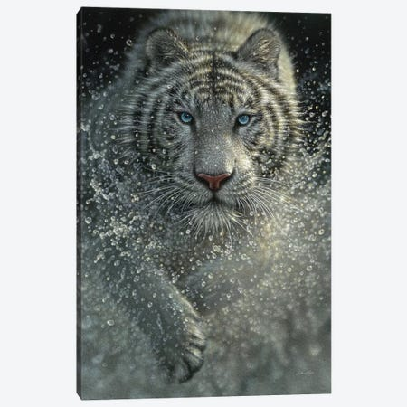 White Tiger - Wet and Wild  Canvas Print #CBO120} by Collin Bogle Canvas Artwork