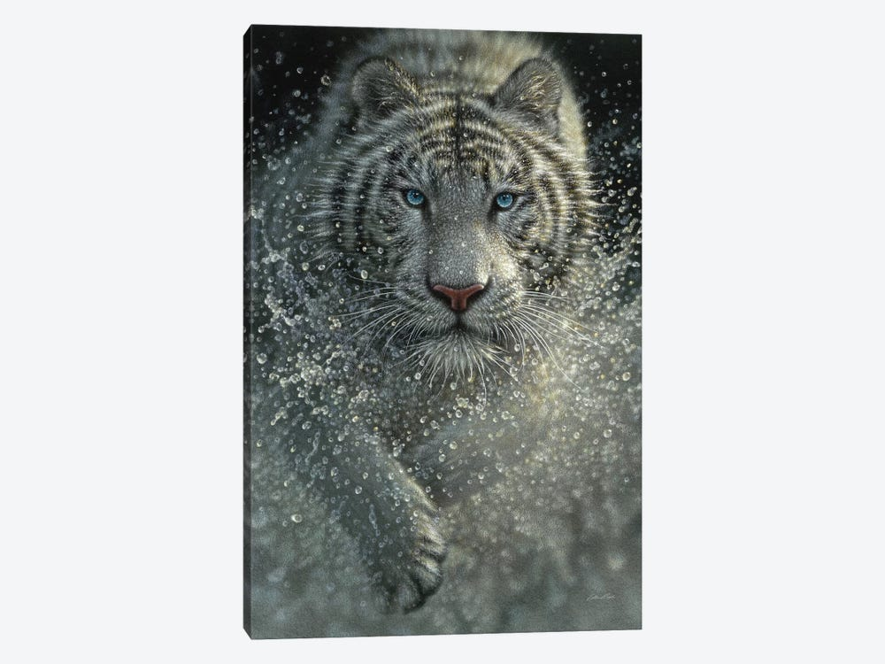 White Tiger - Wet and Wild  by Collin Bogle 1-piece Art Print
