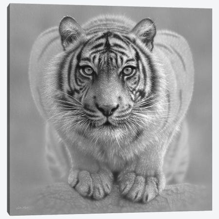 White Tiger - Wild Intentions In Black & White Canvas Print #CBO121} by Collin Bogle Canvas Art