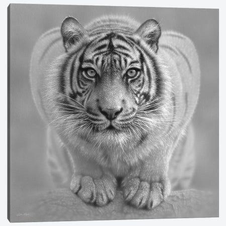 White Tiger - Wild Intentions In Black & White Canvas Print #CBO121} by Collin Bogle Canvas Art