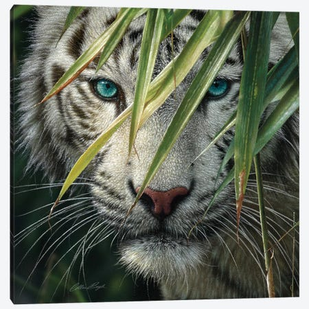 White Tiger Bamboo Forest 3-Piece Canvas #CBO123} by Collin Bogle Canvas Art