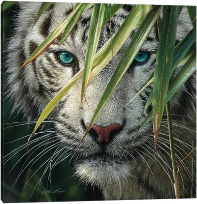 White Tiger Bamboo Forest Canvas Art Print