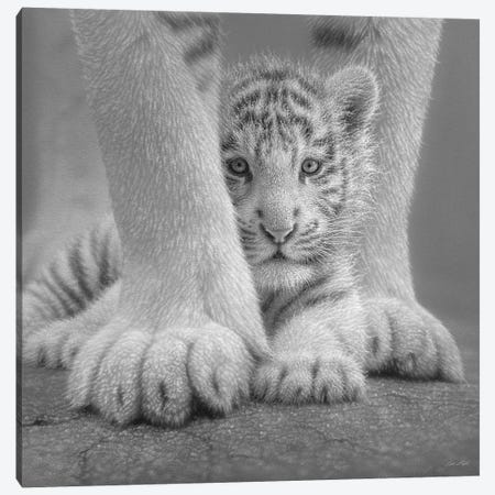 White Tiger Cub - Sheltered In Black & White Canvas Print #CBO124} by Collin Bogle Canvas Art Print
