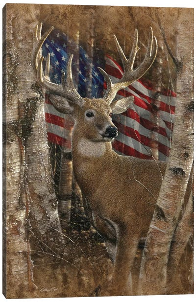 Whitetail Buck - America Canvas Art Print
