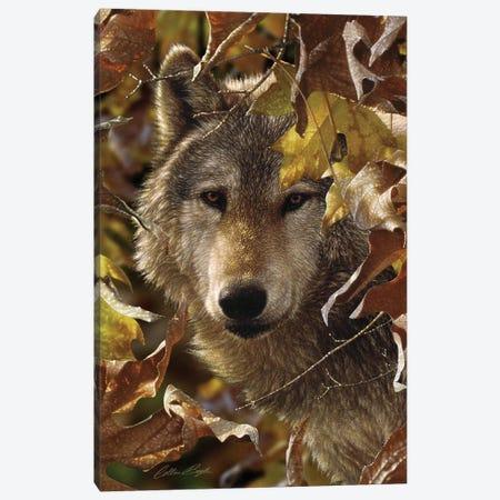 Wolf - Autumn Shadows 3-Piece Canvas #CBO126} by Collin Bogle Art Print