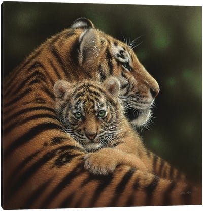 Cherished Tiger Cub, Square Canvas Art Print