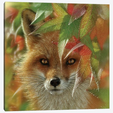 Autumn Red Fox Canvas Print #CBO131} by Collin Bogle Canvas Print