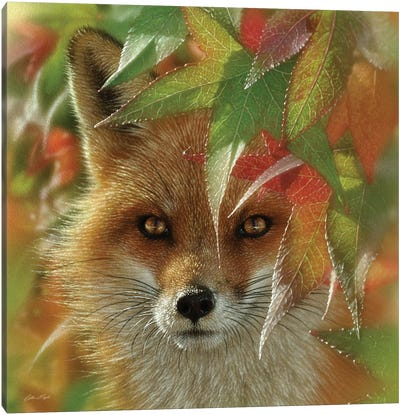 Autumn Red Fox Canvas Art Print