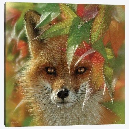 Autumn Red Fox Canvas Print #CBO131} by Collin Bogle Canvas Print