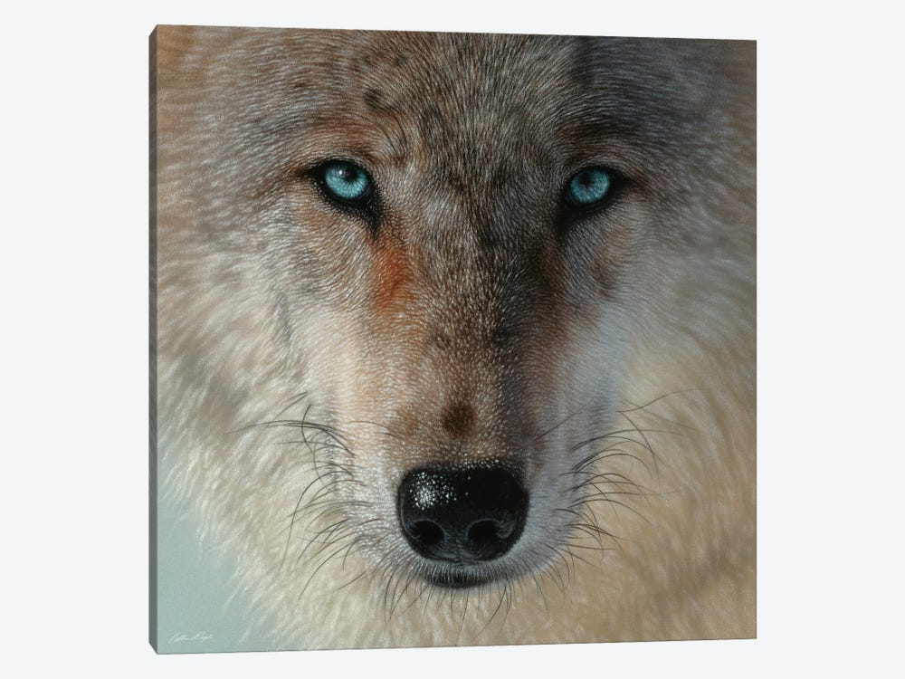 Inner Wolf Pack, Square by Collin Bogle 1-piece Canvas Art Print