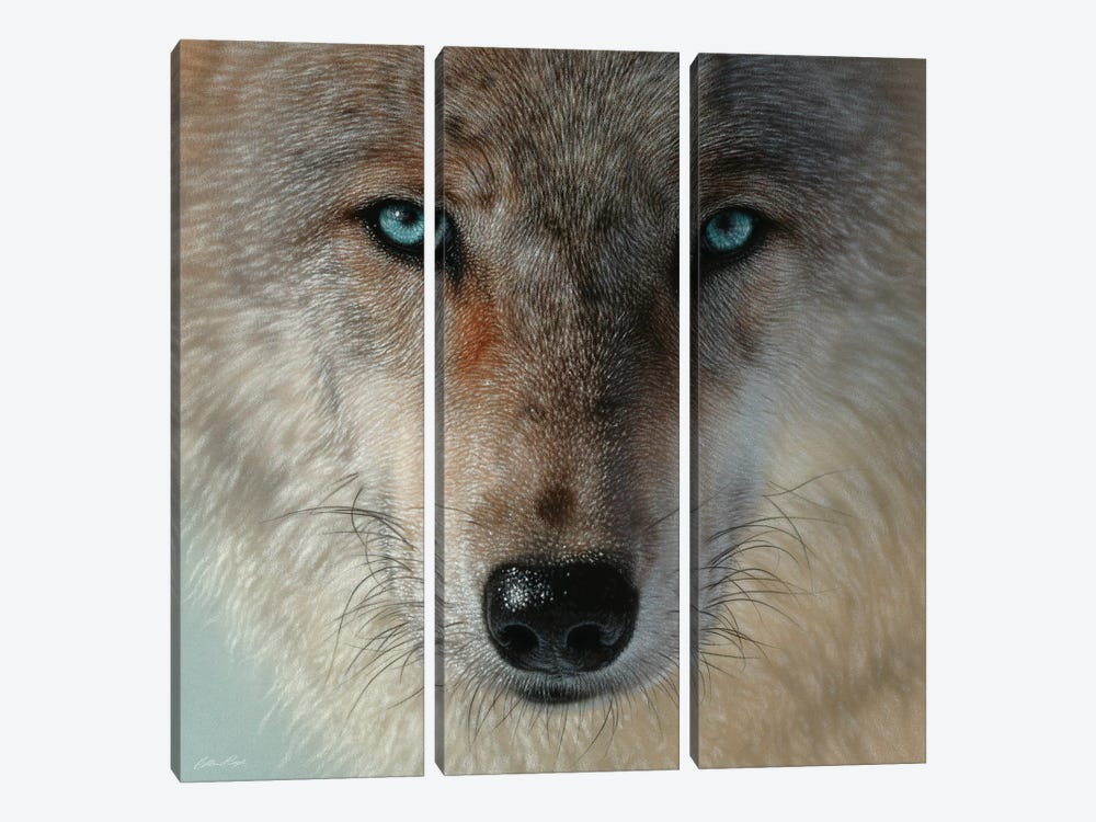Inner Wolf Pack, Square by Collin Bogle 3-piece Canvas Print