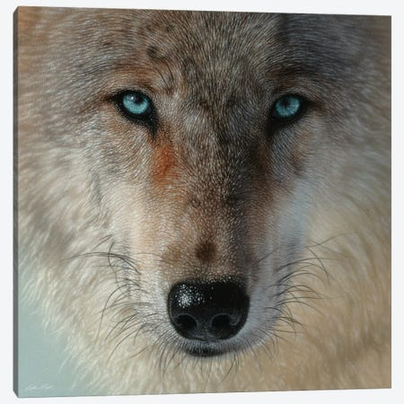 Inner Wolf Pack, Square Canvas Print #CBO133} by Collin Bogle Canvas Print