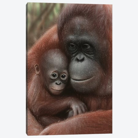 Orangutan Mother & Baby - Snuggled - Vertical Canvas Print #CBO138} by Collin Bogle Art Print