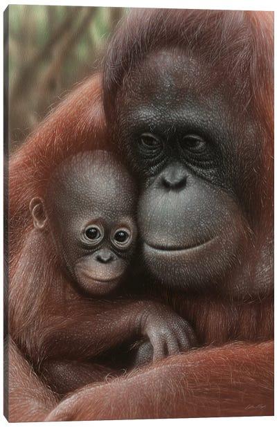 Orangutan Mother & Baby - Snuggled - Vertical Canvas Art Print
