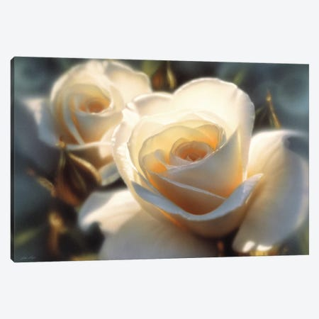 Colors Of White Rose, Horizontal 3-Piece Canvas #CBO13} by Collin Bogle Canvas Artwork
