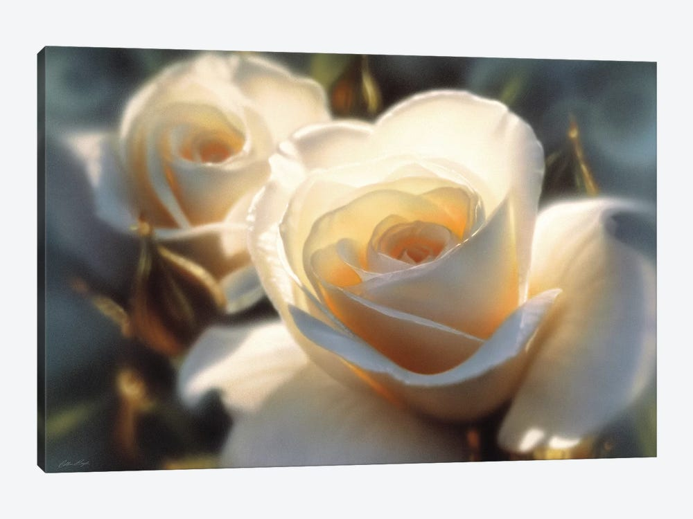 Colors Of White Rose, Horizontal by Collin Bogle 1-piece Canvas Print