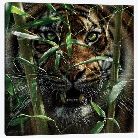 Tiger - Hungry Eyes Canvas Print #CBO144} by Collin Bogle Canvas Art Print