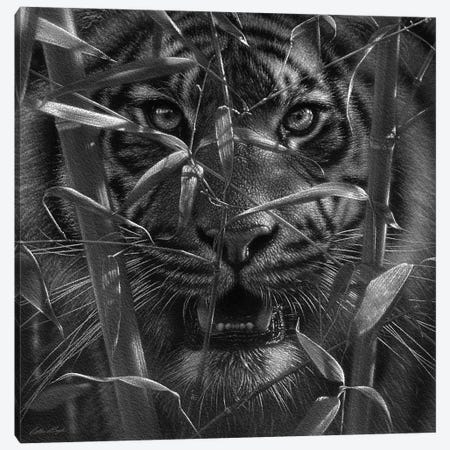 Tiger - Hungry Eyes - Black and White Canvas Print #CBO145} by Collin Bogle Art Print