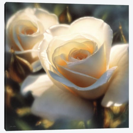 Colors Of White Rose, Square Canvas Print #CBO14} by Collin Bogle Canvas Print