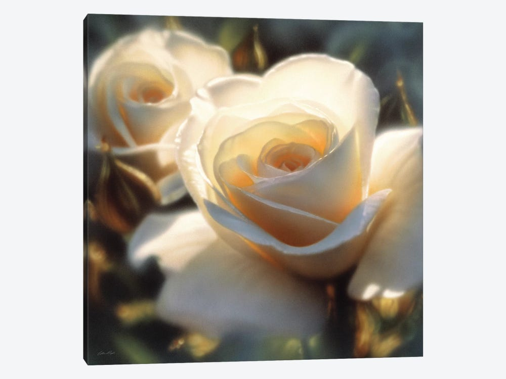 Colors Of White Rose, Square by Collin Bogle 1-piece Canvas Wall Art