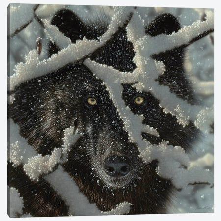 Winter's Black Wolf - Square Canvas Print #CBO151} by Collin Bogle Art Print