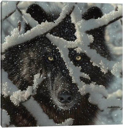 Winter's Black Wolf - Square Canvas Art Print