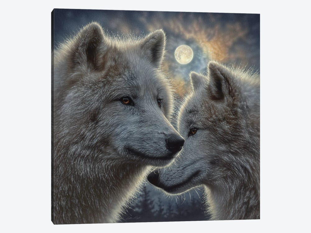 Moonlight Wolf Mates by Collin Bogle 1-piece Canvas Art Print