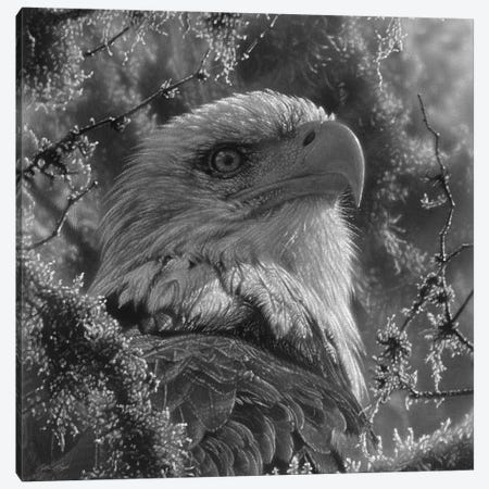Bald Eagle - High And Mighty - Square - Black & White Canvas Print #CBO155} by Collin Bogle Canvas Wall Art