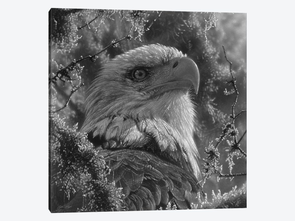 Bald Eagle - High And Mighty - Square - Black & White by Collin Bogle 1-piece Canvas Art Print
