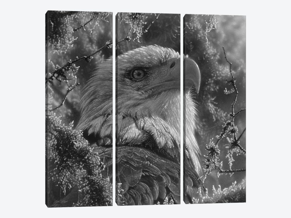 Bald Eagle - High And Mighty - Square - Black & White by Collin Bogle 3-piece Art Print