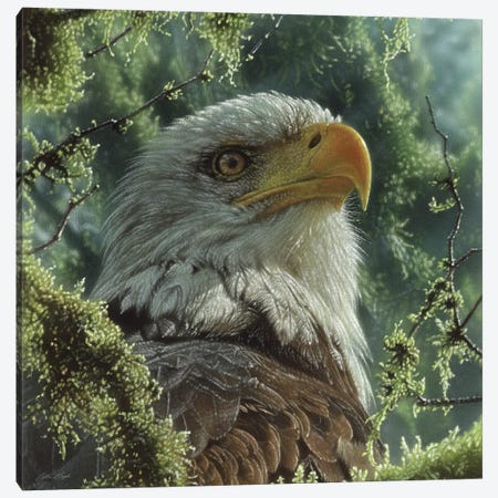 Bald Eagle - High And Mighty - Square Canvas Print #CBO156} by Collin Bogle Canvas Wall Art