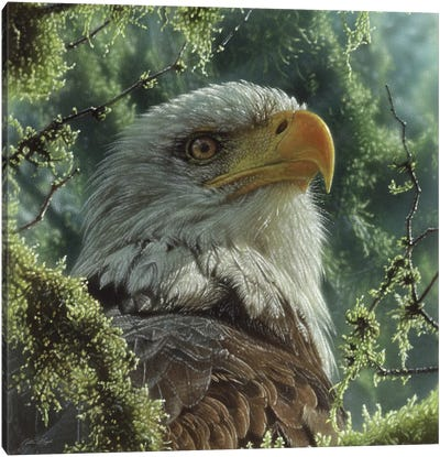 Bald Eagle - High And Mighty - Square Canvas Art Print